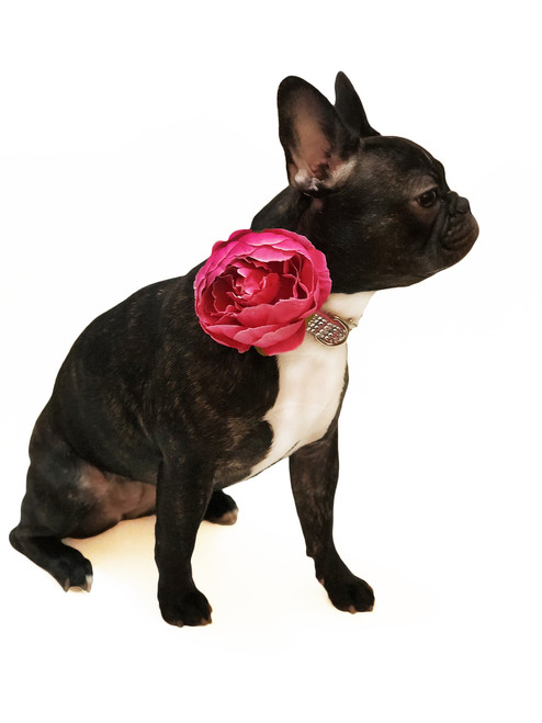 Hot Pink Dog Collar Flower