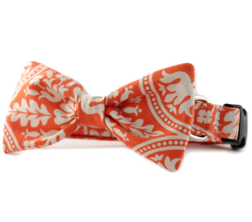 Flynn Bow Tie Dog Collar
