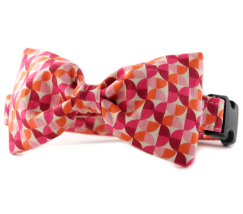 Alyssa in Orange Bow Tie Dog Collar