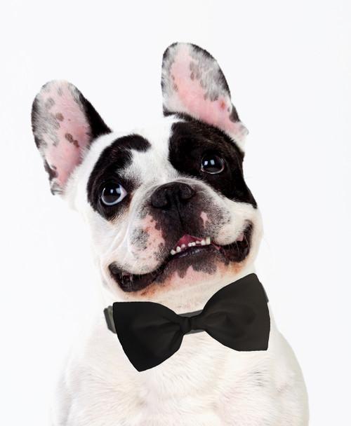 Dog Bow Tie Accessory in Black