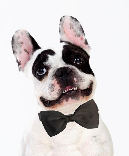 Dog Bow Tie Accessory in Gray
