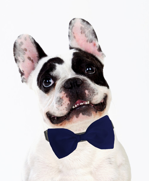 Dog Bow Tie Accessory in Navy Blue