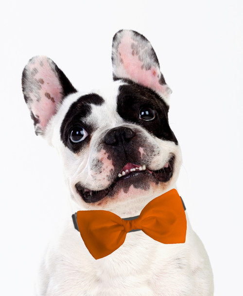 Dog Bow Tie Accessory in Orange
