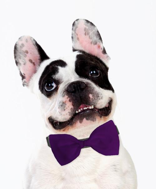 Dog Bow Tie Accessory in Purple