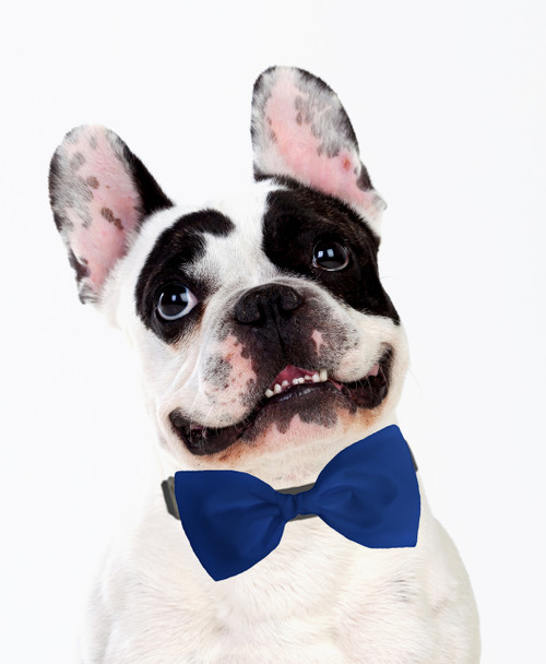 Dog Bow Tie Accessory in Royal Blue