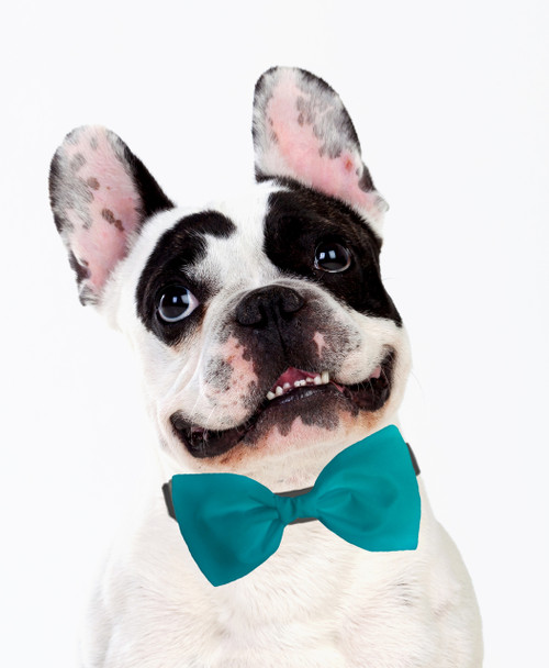 Dog Bow Tie Accessory in Turquoise