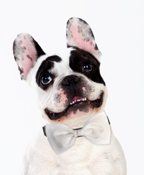 Dog Bow Tie Accessory in White