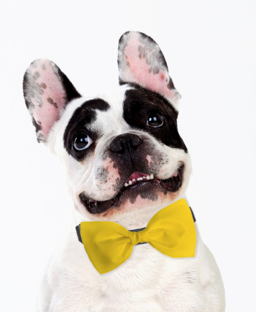 Dog Bow Tie Accessory in Yellow