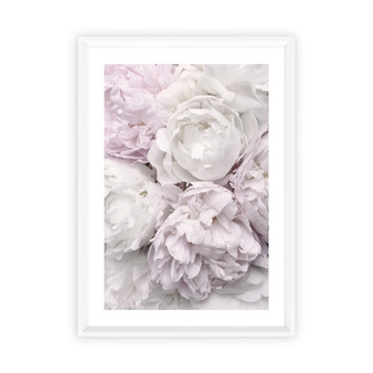 Peony Bloom Photographic Wall Art Print, with optional white timber frame