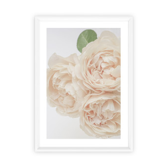 Unforgettable Rose Photographic Wall Art Print in Peach Blush, with optional Australian made white timber frame.