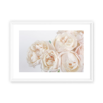 La Belle Rose Photographic Wall Art Print in Peach Blush with optional white timber frame