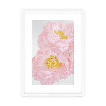 Sweet Peony Photographic Wall Art Print in optional white timber frame