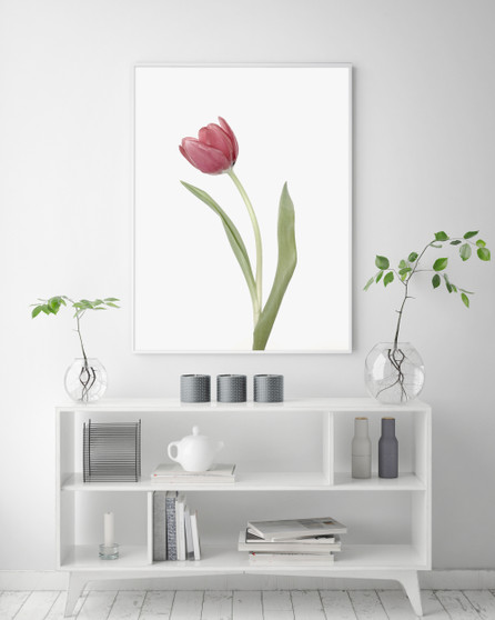 Simplicity Tulip Wall Art Print, with optional Australian-made white timber frame.