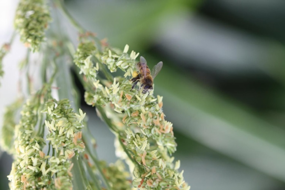 There's a good correlation between bee health and agriculture according to UT researchers.