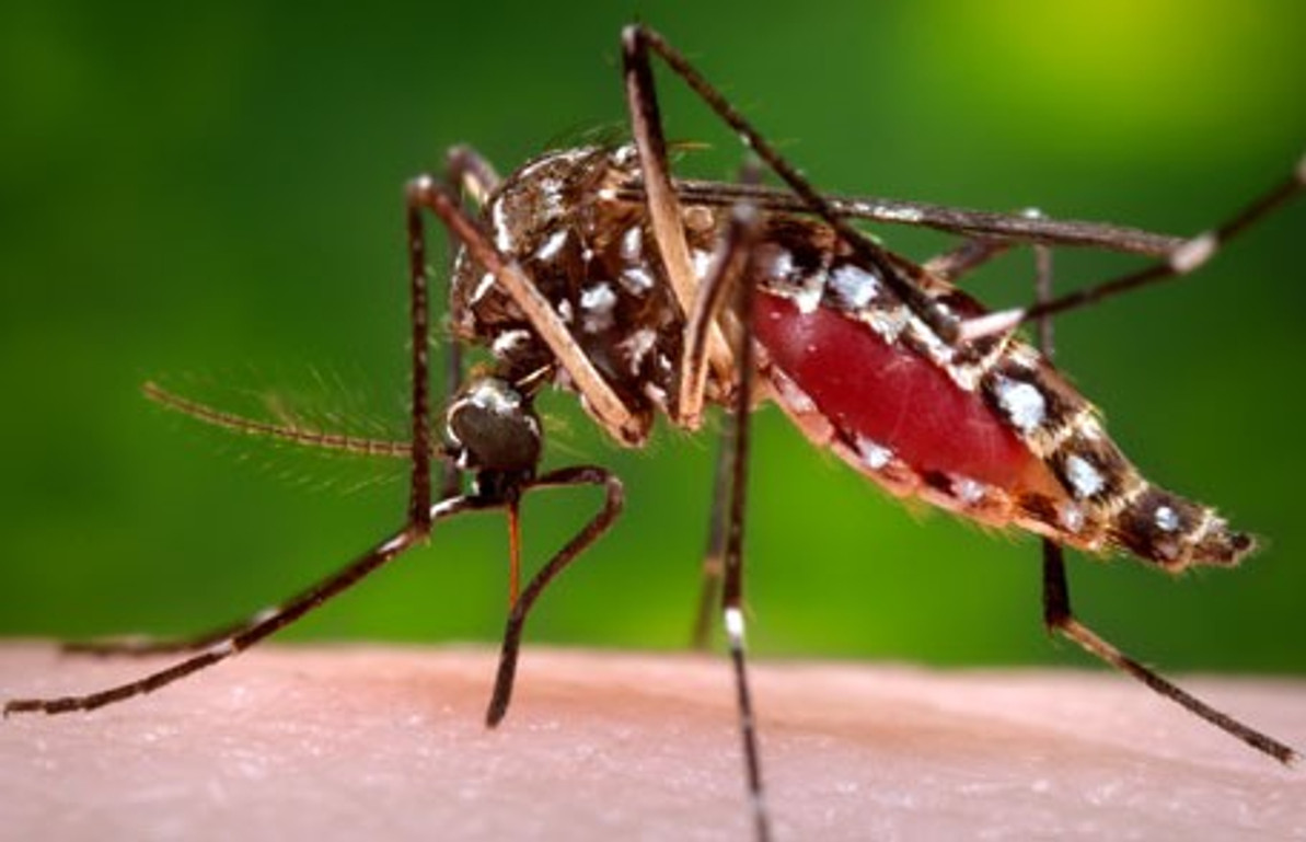 Scientists kill malaria-carrying mosquitoes with genetically engineered fungi that's safe for bees!
