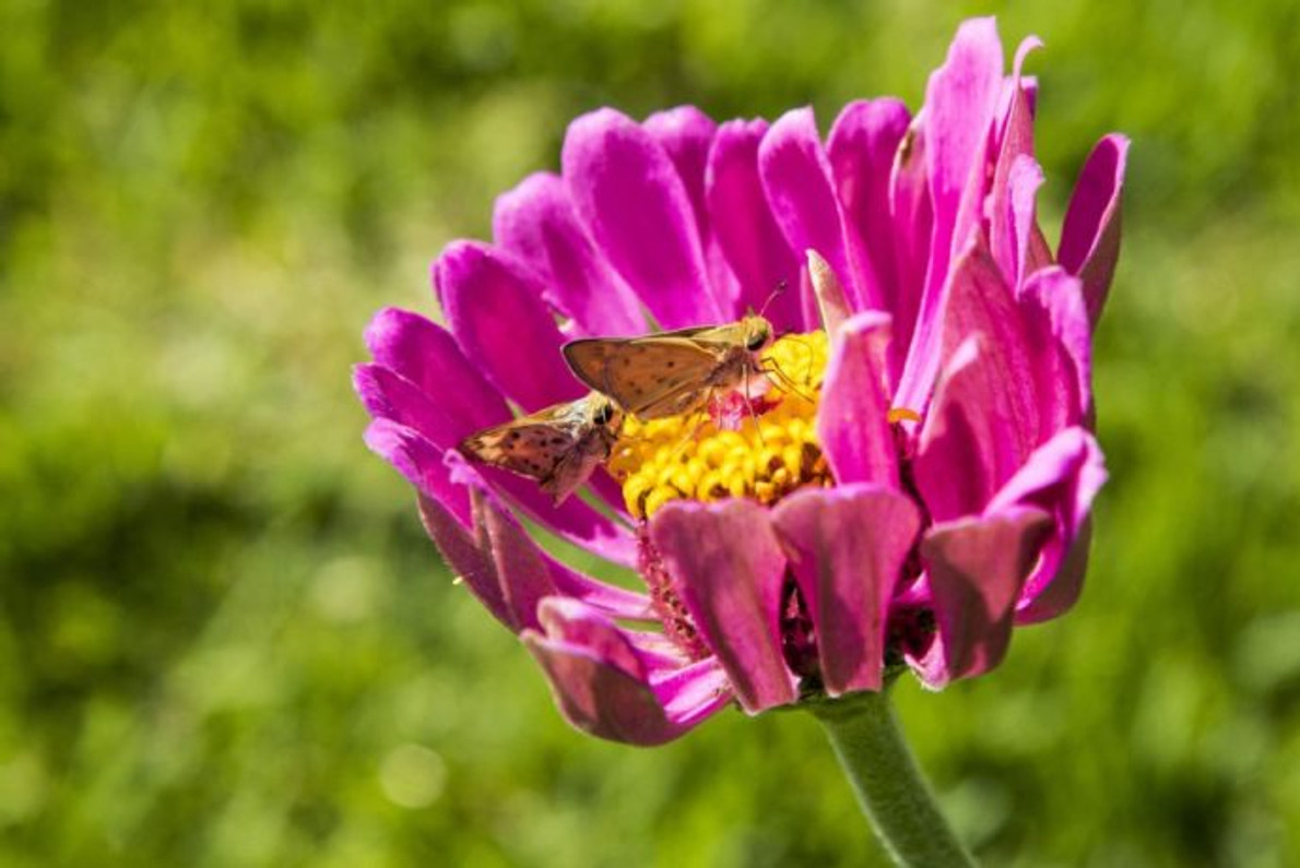 Pollinators Face Challenges From Environmental Contaminants, Disease And Parasites And Significant Loss Of Habitat.