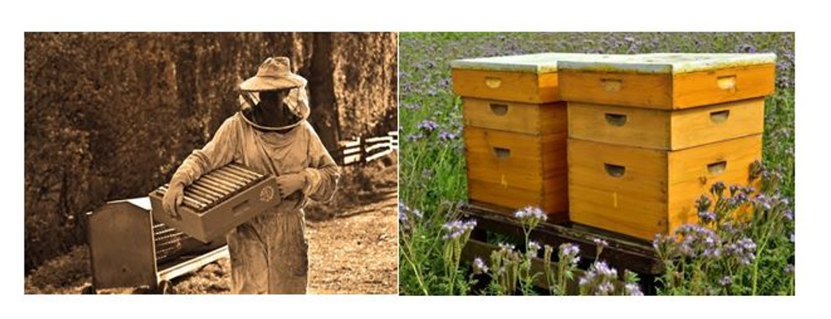 It's All About the Bees: Displaced Workers Find Jobs Within an Appalachian Tradition