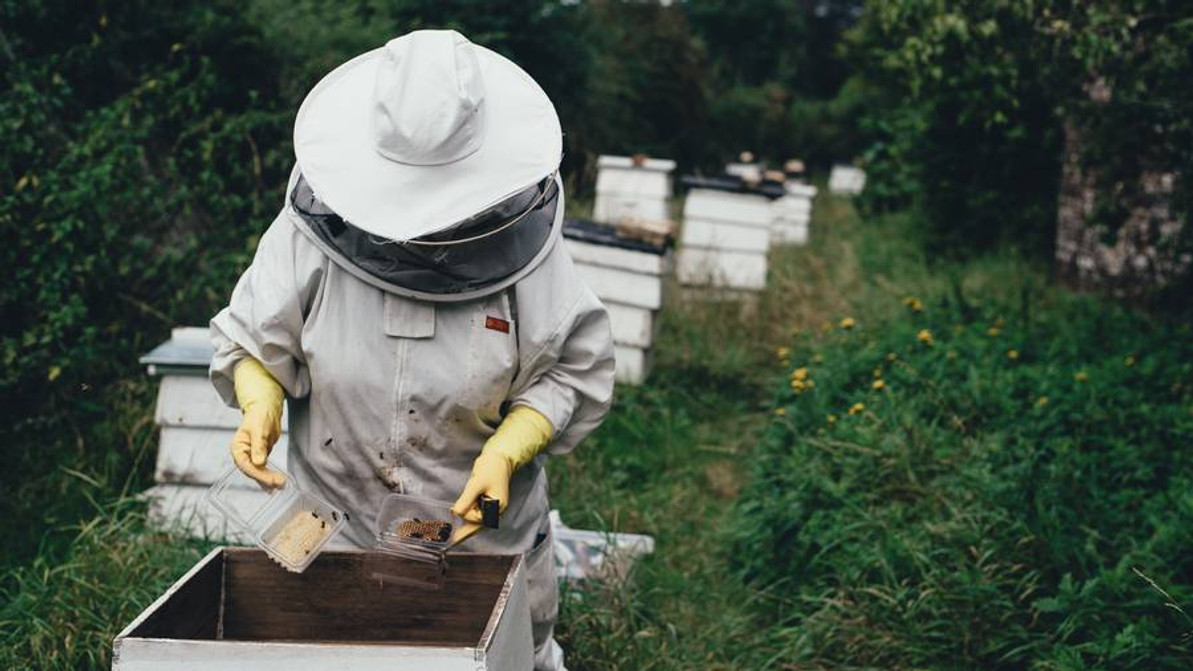 TOO MANY BEES, NO MATTER WHERE, CAN BE A BAD THING FOR BEES, BEEKEEPERS AND ANYBODY IN THE FECAL FLIGHT PATH.