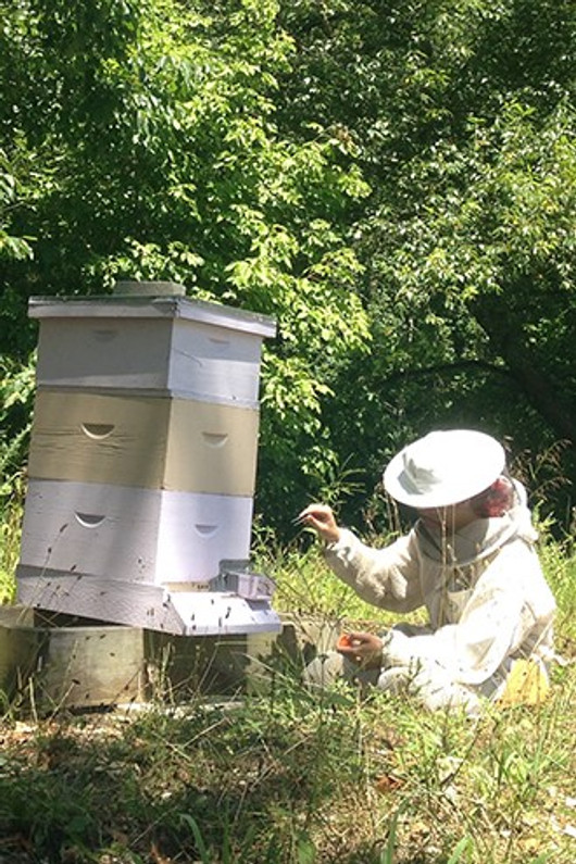 Earning a Bee's Wings. In Hives, Graduating to Forager a Requirement for Social Membership it is a Classic Coming-of-Age Story, in Many Ways.