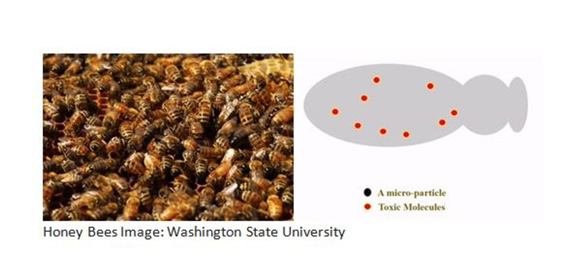 SCIENTISTS CREATE MICROPARTICLES THAT COULD HELP SAVE HONEY BEES.