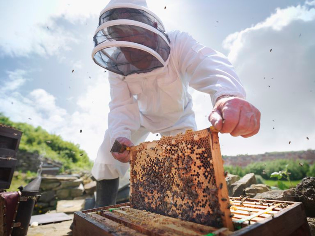 Accidental Discovery Could Save Bees From Their Greatest Threat