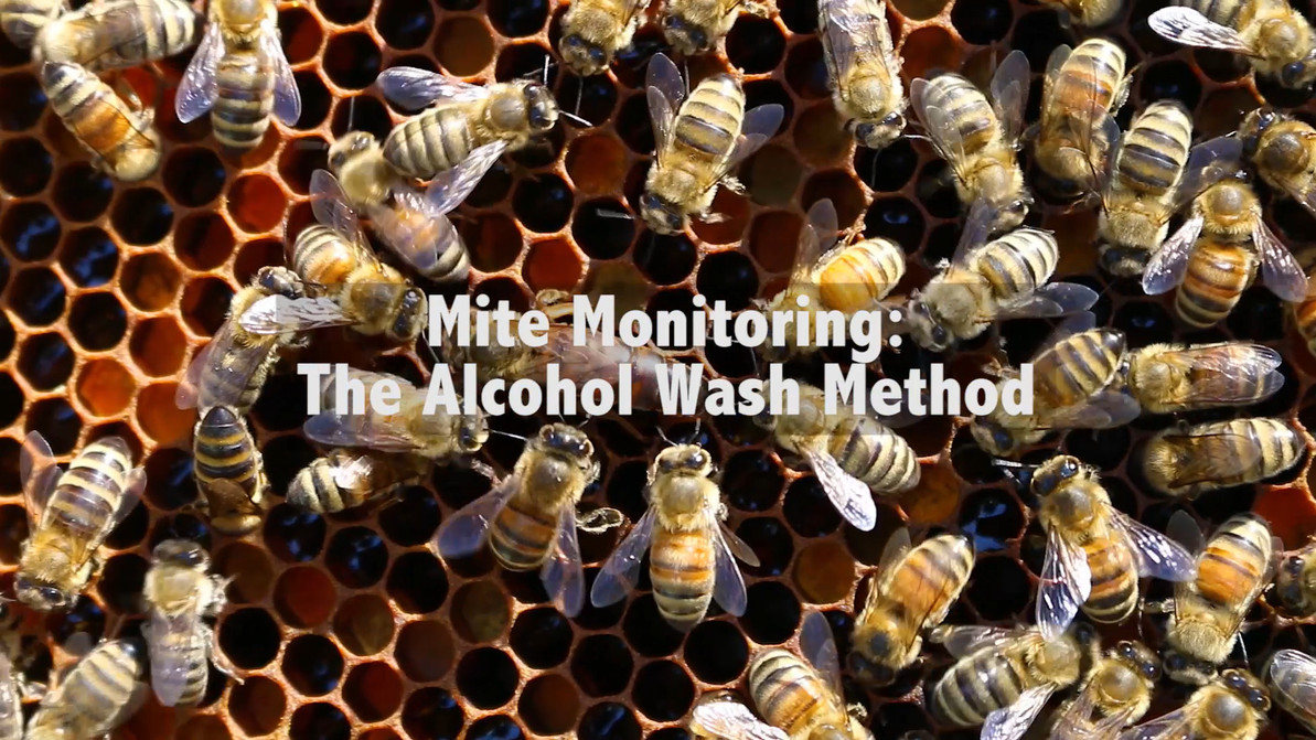 Mite Monitoring: The Alocohol Wash Method