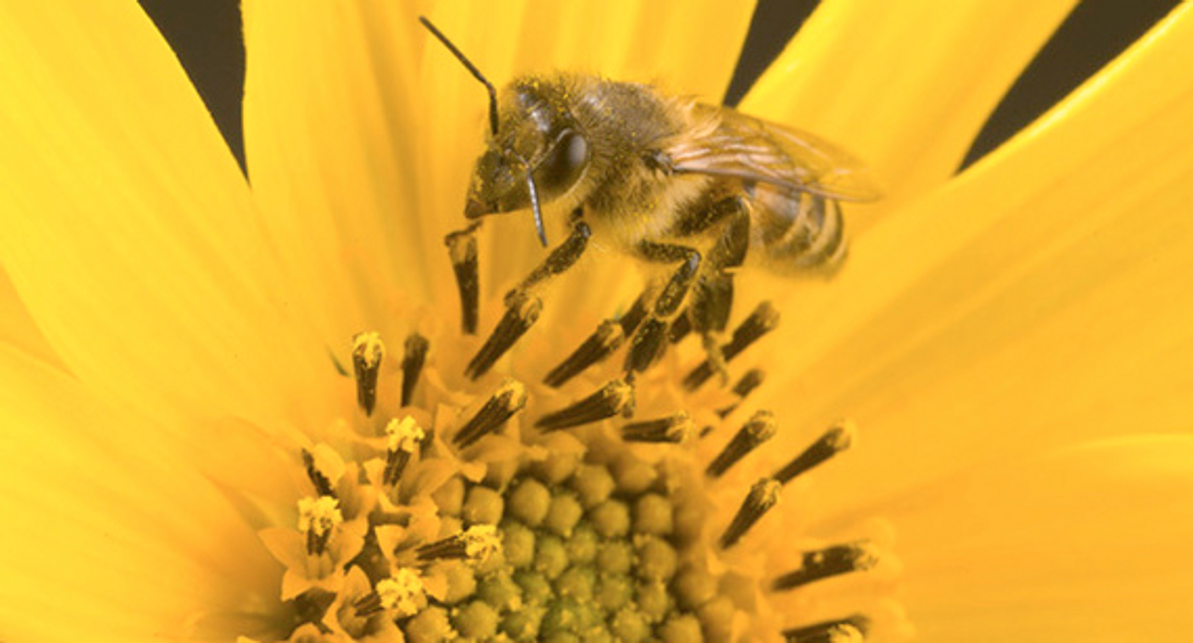 Australian Scientists Taught Bees the Concept of Zero — Something Human Children Struggle With.