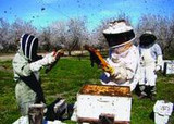 Protecting bees from pesticides: Now there's an app for that