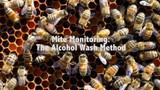 Mite Monitoring: The Alocohol Wash Method