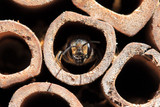 Raising Native Bees: Why & How?