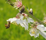 Seeing the Beauty in Pollinators