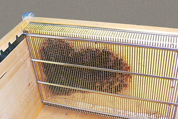 Single Frame Queen Confinement Cage