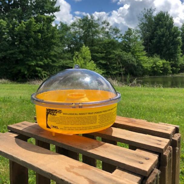 wasp/yellow jacket trap