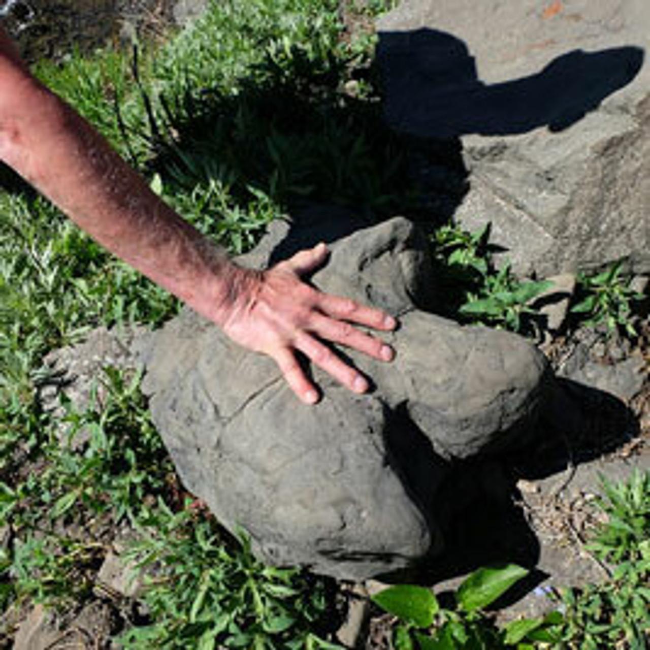 Paleontology in Denali