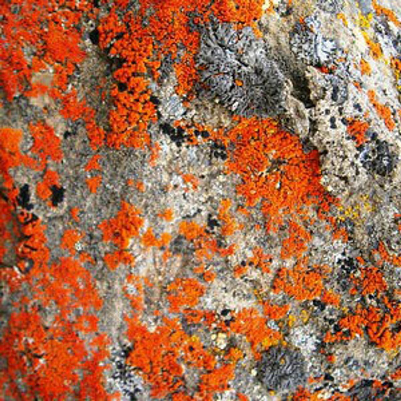 Denali's Mosses and Lichens
