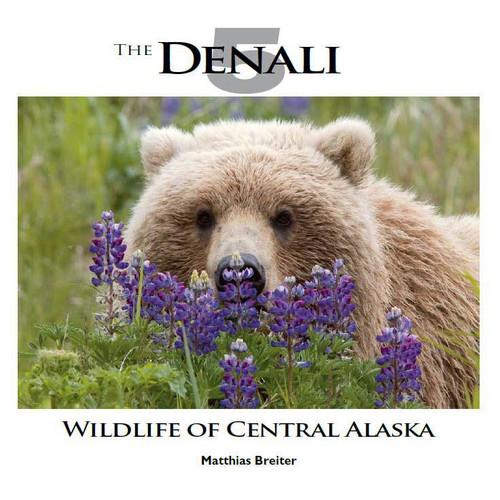 The Denali 5 - Wildlife Of Central Alaska