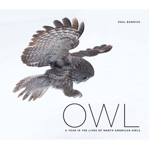 Owl: A Year in the Lives of North American Owls