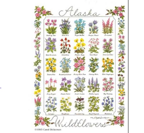 Poster - Alaska Wildflowers by Carol Dickerson