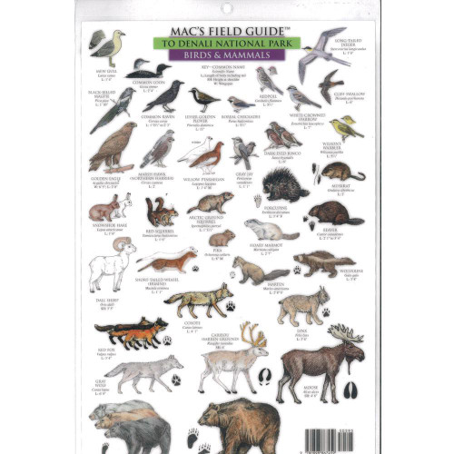 Mac's Field Guides: Denali National Park (Flowers and Trees/Birds and Mammals)