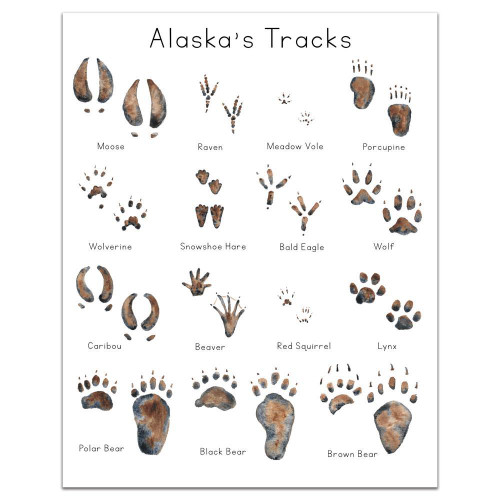 Alaska Animal Tracks Art Print