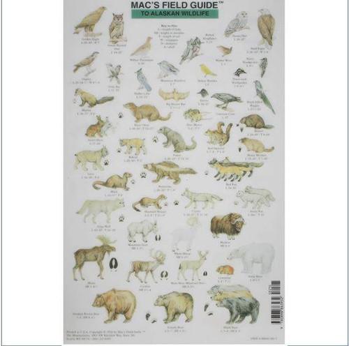 Mac's Field Guides: Alaskan Wildlife