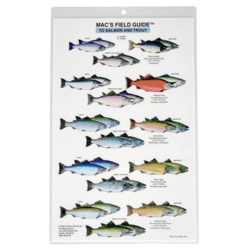 Mac's Field Guides: North American Salmon & Trout