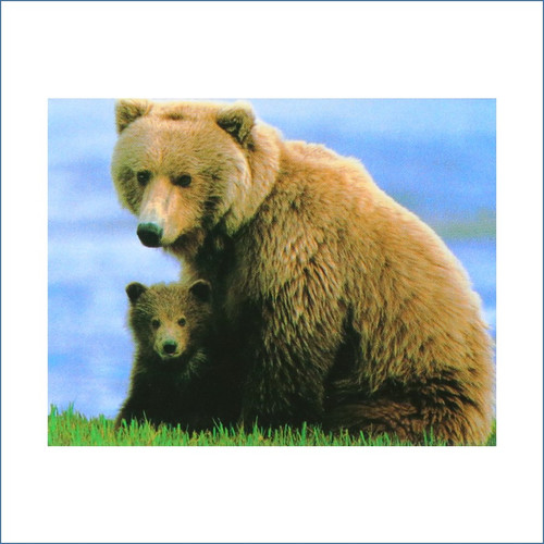 Grizzly Bear & Cub Magnet