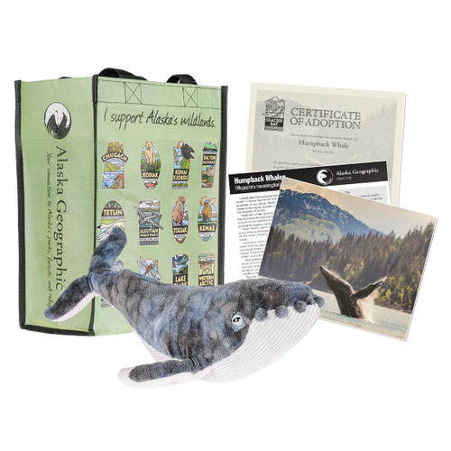 Adoption Kit - Humpback Whale-Glacier Bay