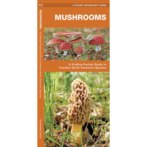 Mushrooms: A Folding Pocket Guide to Familiar North American Species