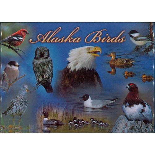 Magnet - Alaska Wild Images - Alaska Birds