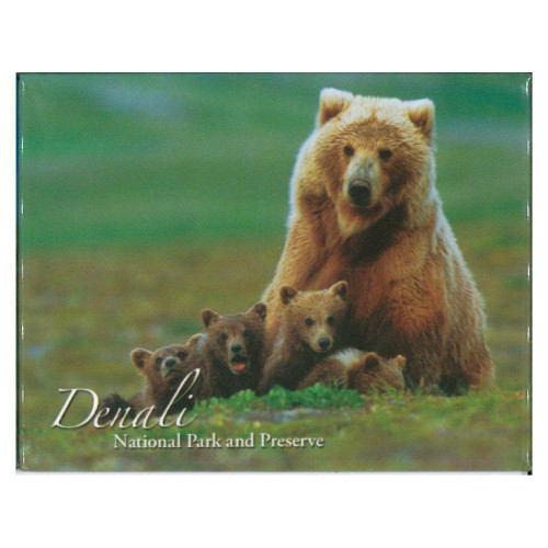 Magnet - Denali National Park Grizzly Cubs
