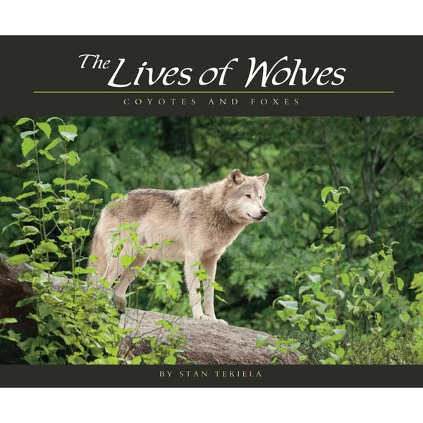 The Lives of Wolves, Coyotes and Foxes by Stan Tekiela