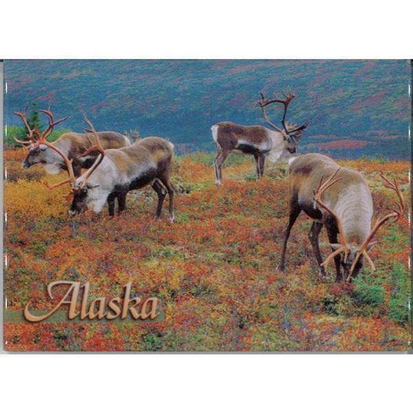 Magnet - Alaska Wild Images - Four Bull Caribou