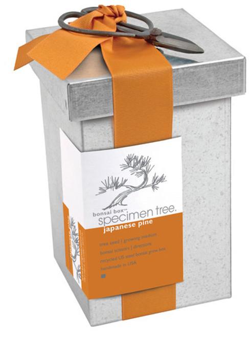 Bonsai Box Japanese Pine